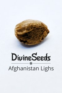afghanistan-lighs