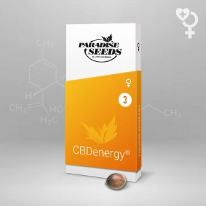 cbdenergy-cbd-seeds_1