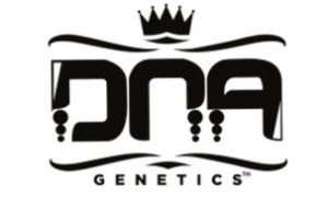 dna-genetics-cannabis-seeds-869433