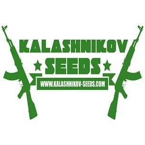 kalashnikov-seeds_download_cat_thumb_cdc6763e-d7b6-41ed-8357-11f59cdd6127_1024x1024124
