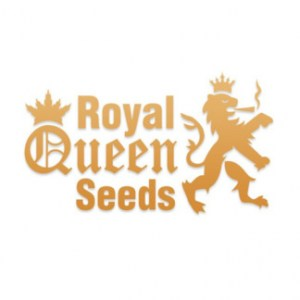 royal-queen-seeds-324x32458