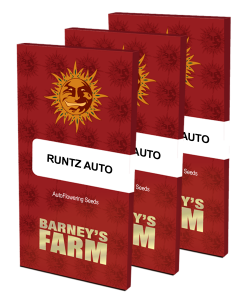 runtz-auto_packet_large_seeds