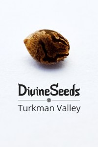 turkman-valley